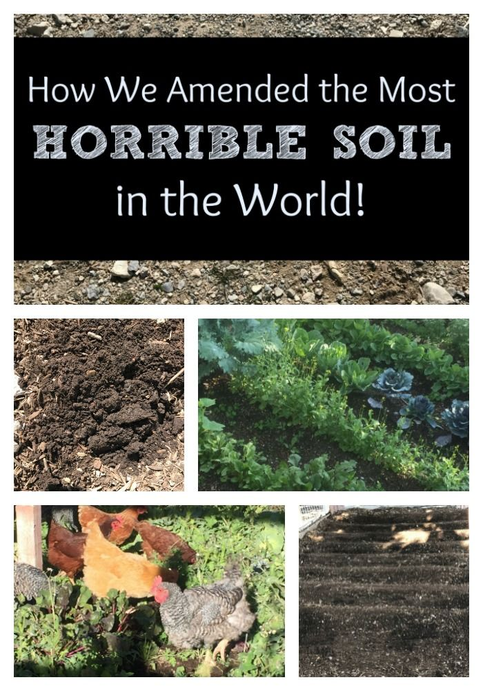 How To Amend The Most Horrible Soil In The World 5 Tips To Help