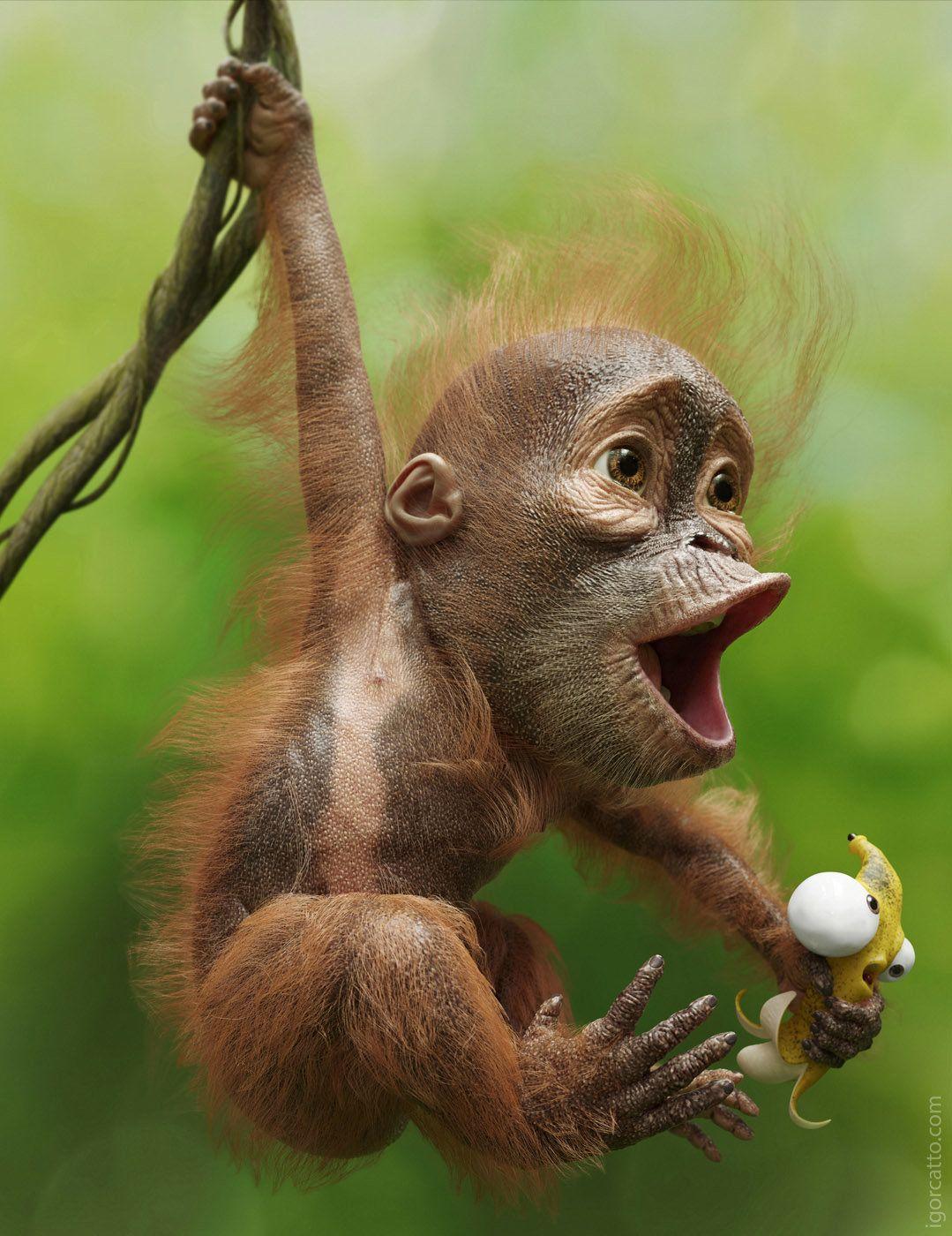 делать, смешные рожицы животных картинки фотон обладает