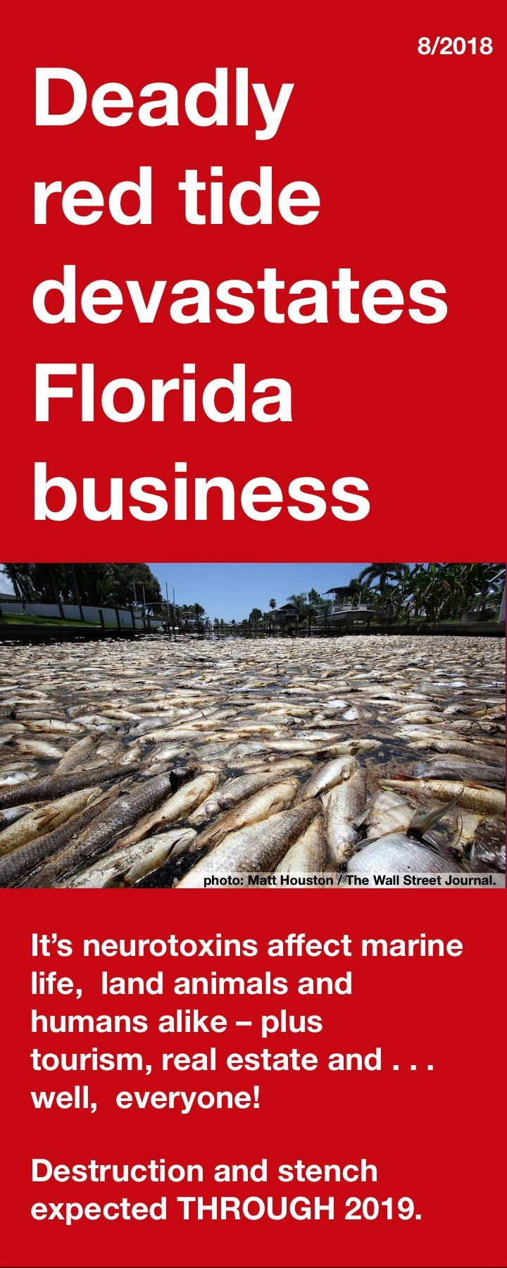 Deadly red tide devastates business as 267 TONS of fish