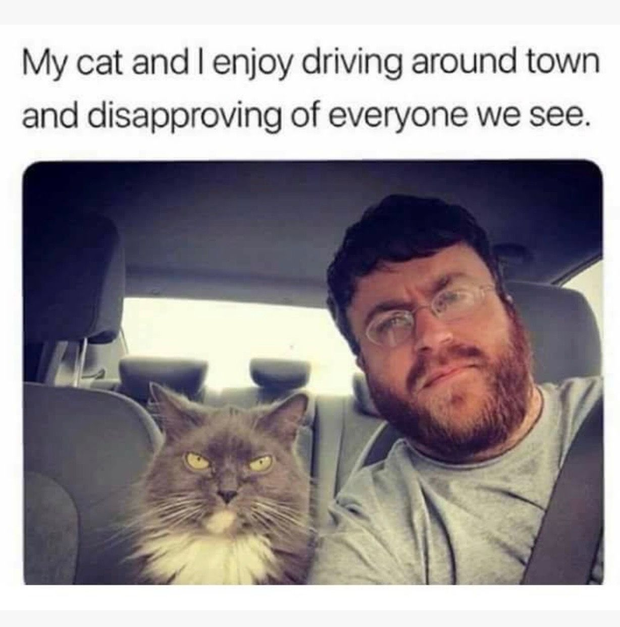 Pin By Jill Wayman On Humor Funny Cat Memes Cute Funny Animals Funny Animal Memes