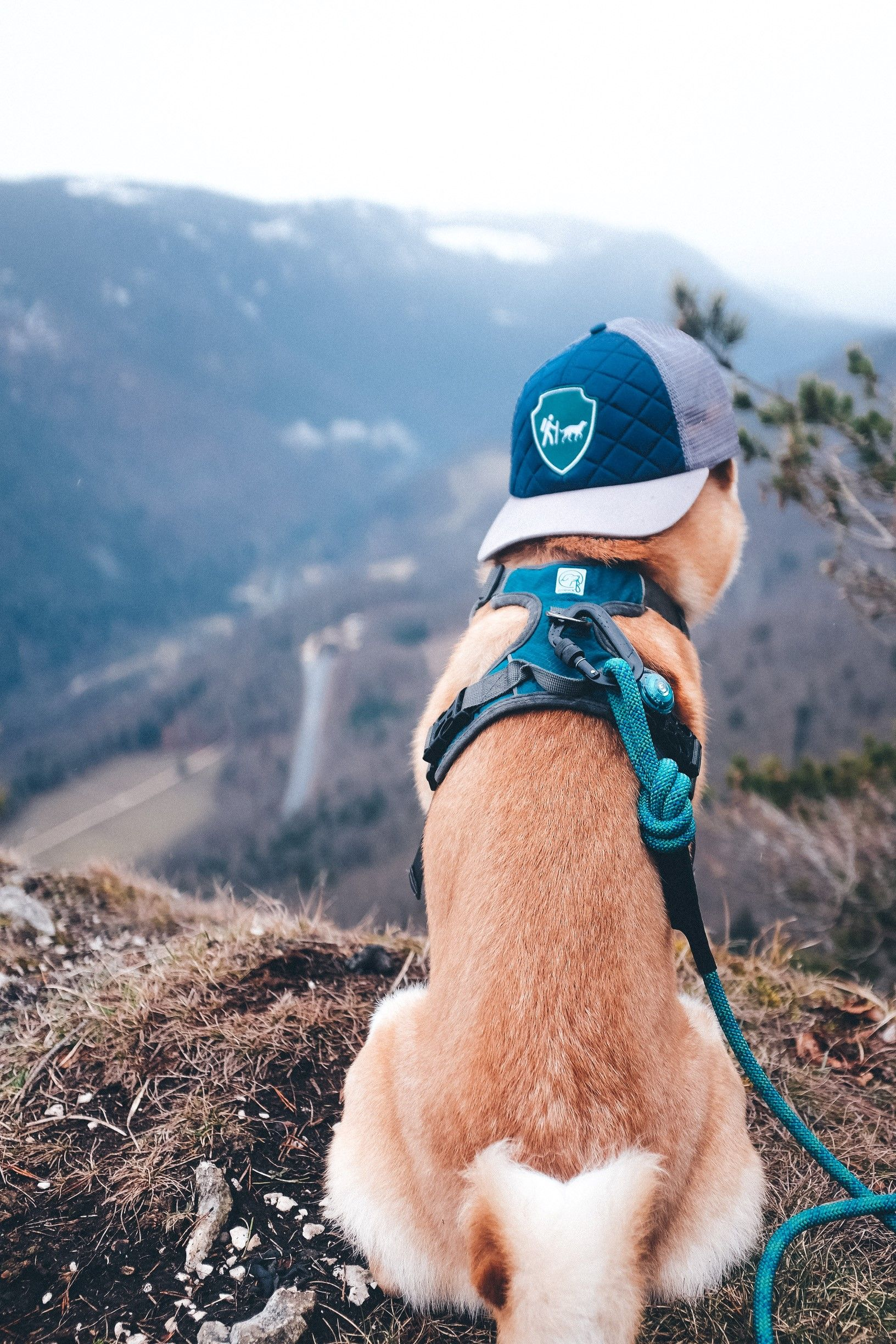 For Adventure Dogs Who Love To Camp Our Embark Pets Adventure Dog