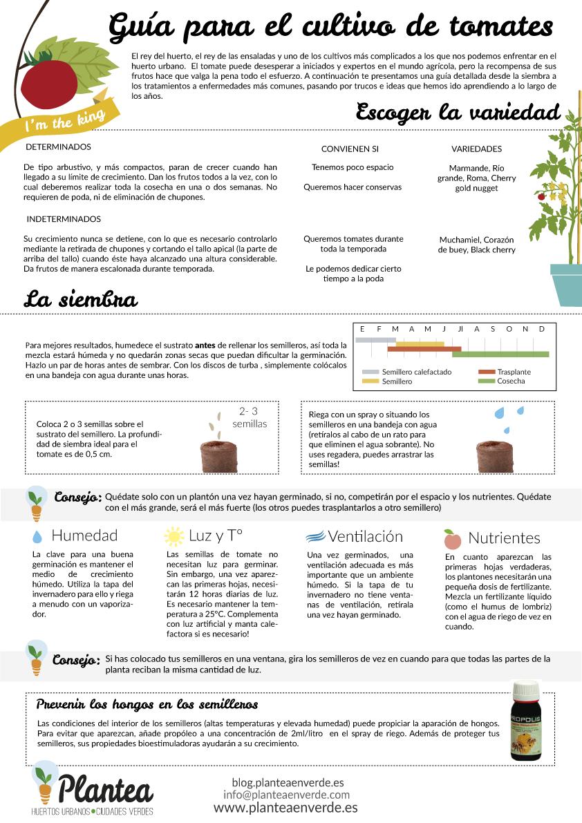 C Mo Cultivar Tomates Gu A Completa Huerto Huerto Urbano  ~ Como Cultivar Tomates En El Huerto