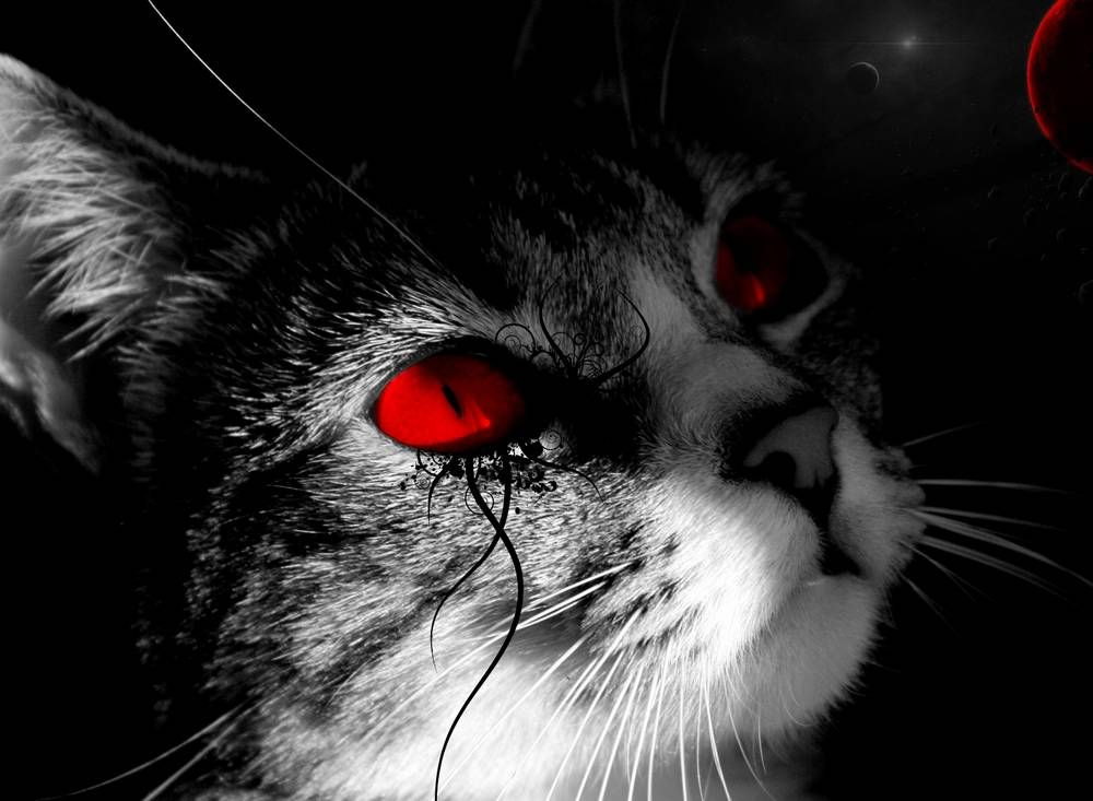 white black cat red eyes wallpaper hewan
