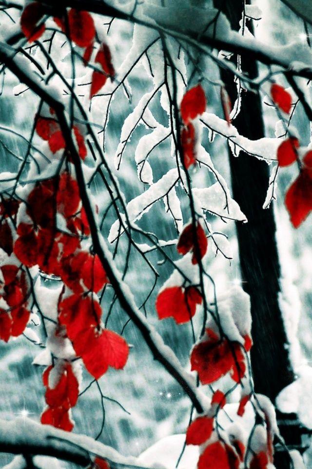 640-snow_leaves-l