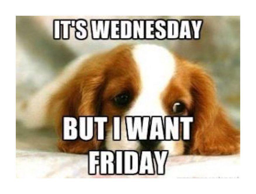 Middle Of The Week Seems Like Wednesdaymotivation Wednesdaythoughts Wednesdaywisdom Trolls M Funny Wednesday Memes Morning Quotes Funny Wednesday Humor