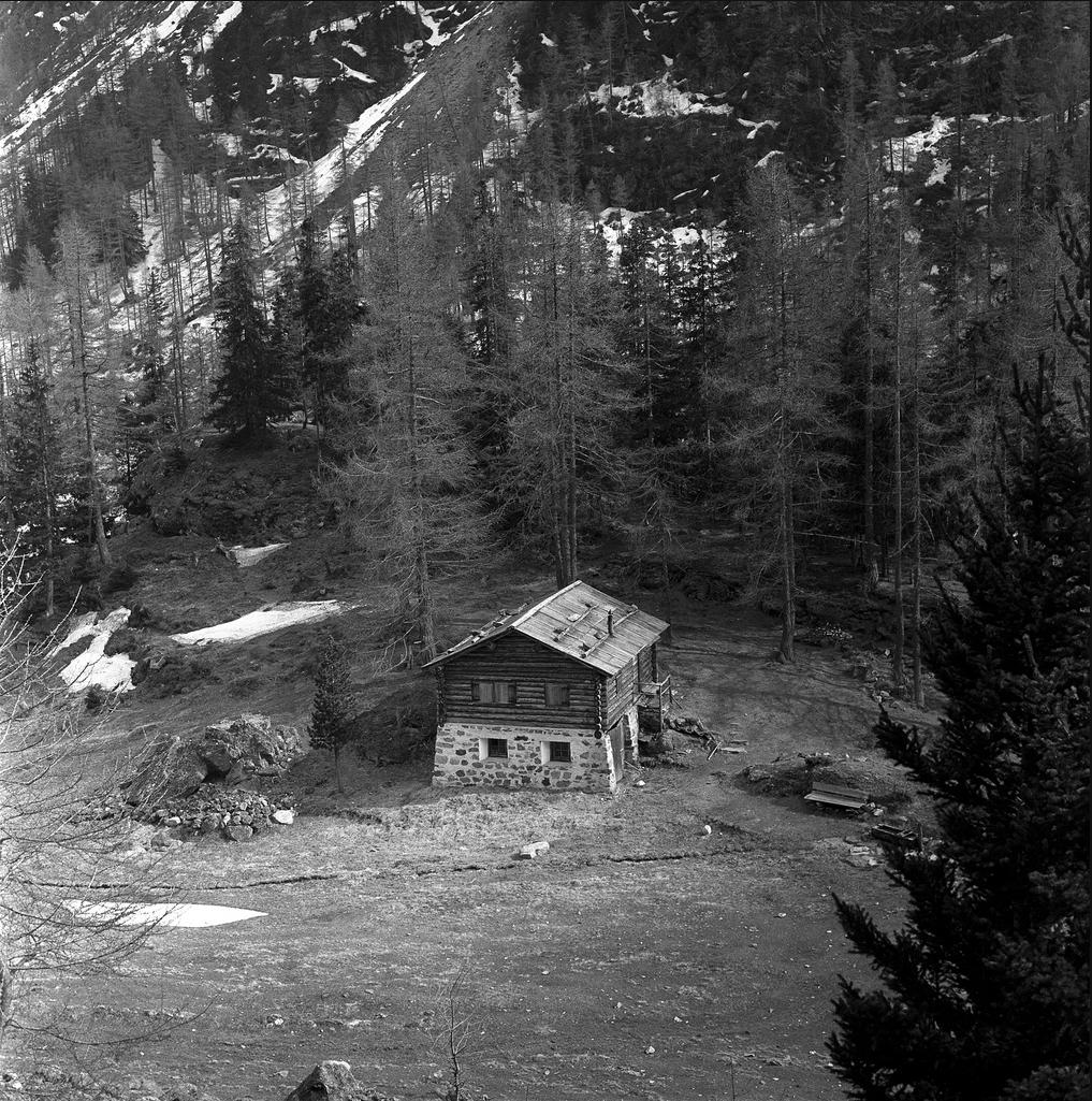 Log cabin redhead