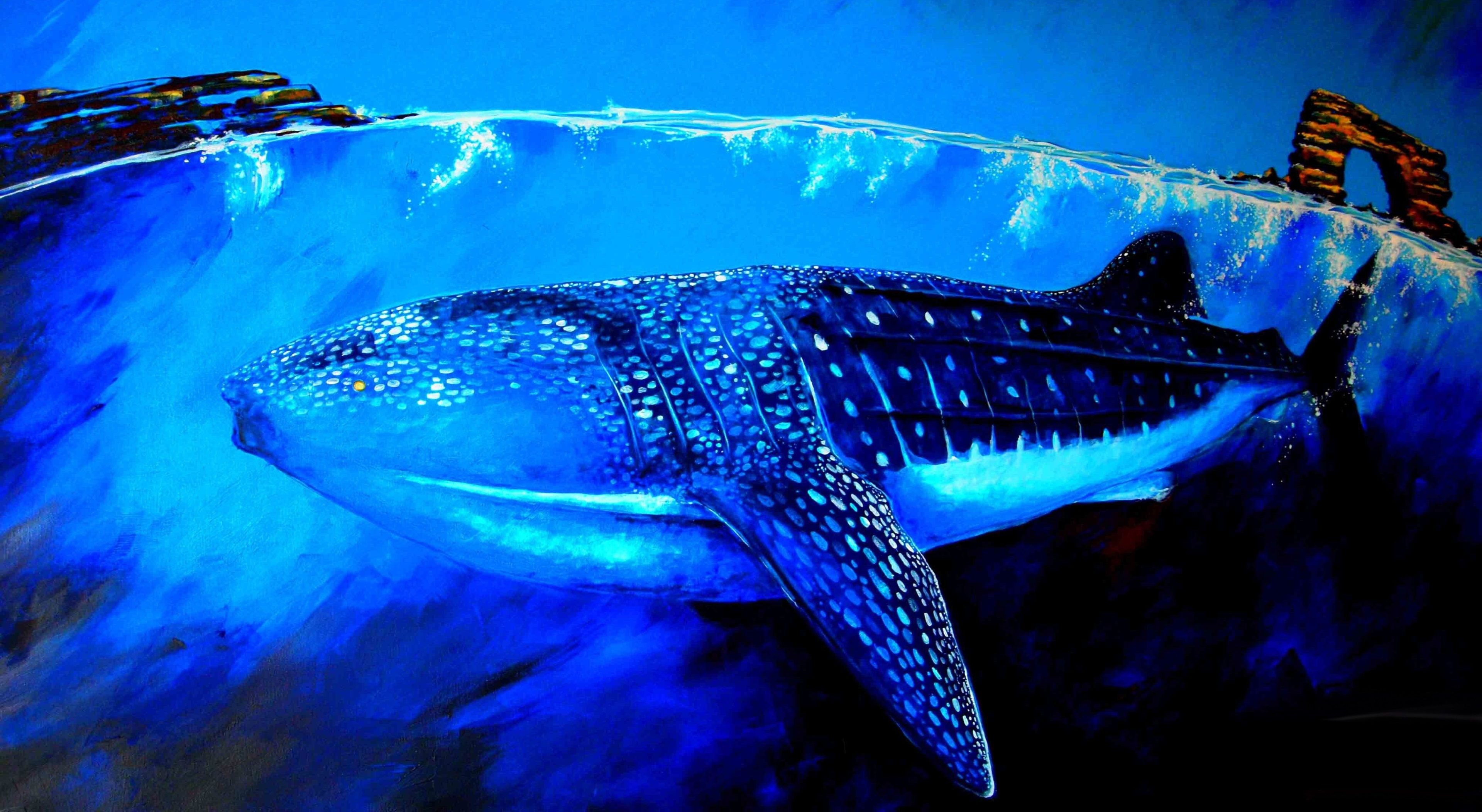 3840x2105 whale shark 4k wallpapers hd high resolution