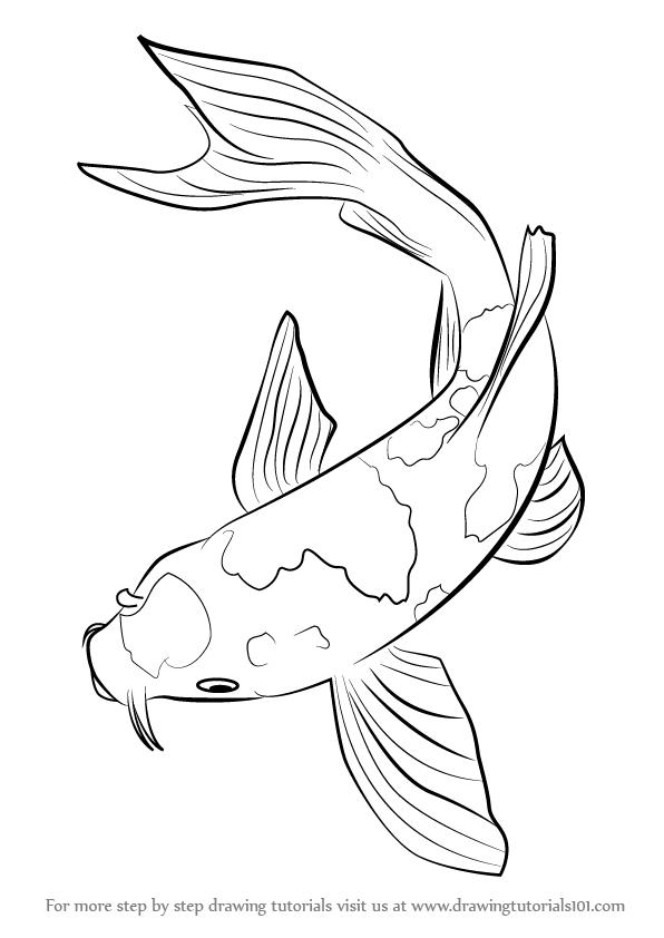 Koi fish belongs tot he c carpio specie in this tutorial for Koi fish outline