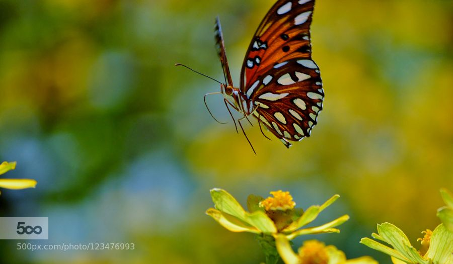 Coming to See you! by jinglijuly #nature