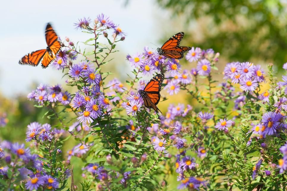 These Vibrant Flowers And Plants Provide Nectar For Butterflies And Create A Bold Bor Butterfly Garden Flowers That Attract Butterflies Flowers For Butterflies