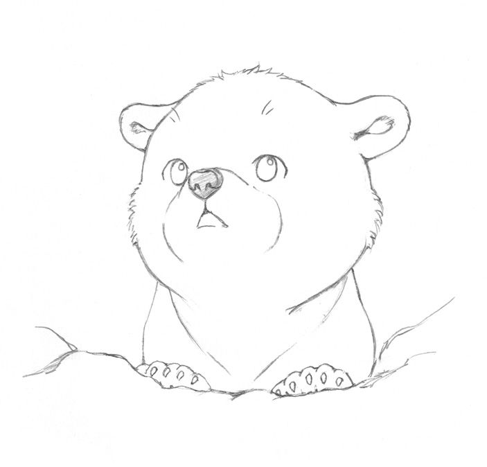 Line Drawing Of Bear Face : The last of polar bears sketch art рисунки