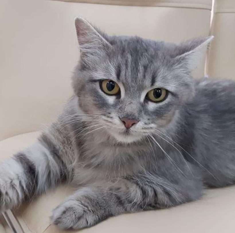 150 Best Grey Cat Names Животные