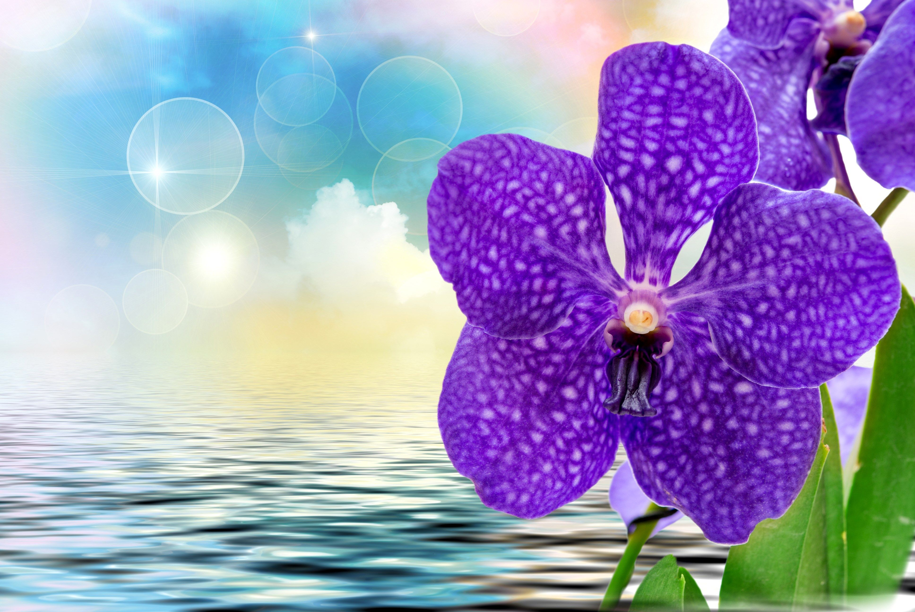 3872x2592 Px Beautiful Orchid Image By Trent Chester For Pocketfullofgrace