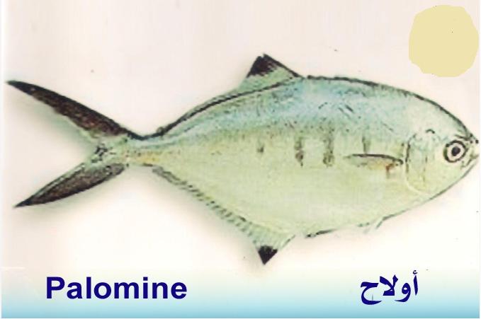 تعريف اسماء الاسماك بدلجة المغربية و الفرنسية البحار المغربي Fish Whale Animals