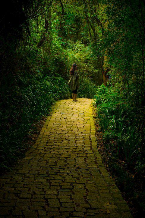~Back to the howling old owl in the woods, hunting the horny back toad.  Oh, I've finally decided my future lies  beyond the yellow brick road...~