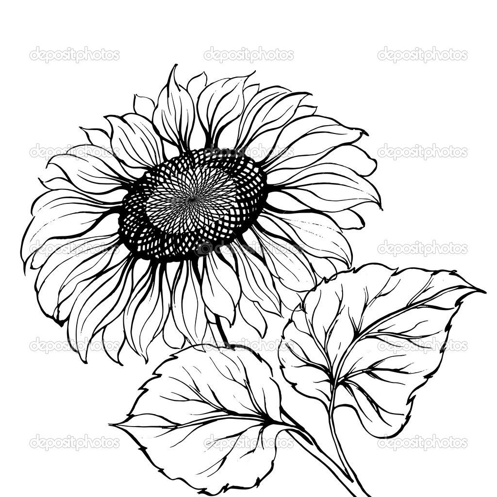Black And White Silhouette Images Sunflower