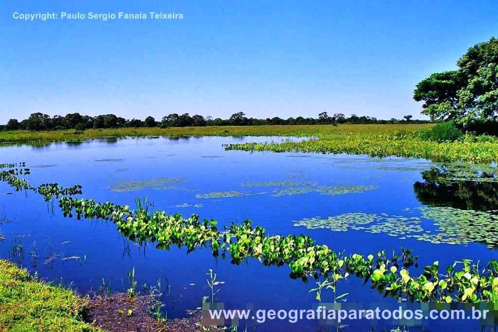 Pantanal Pesquisa Google Pantanal Brasileiro Pantanal E Biomas