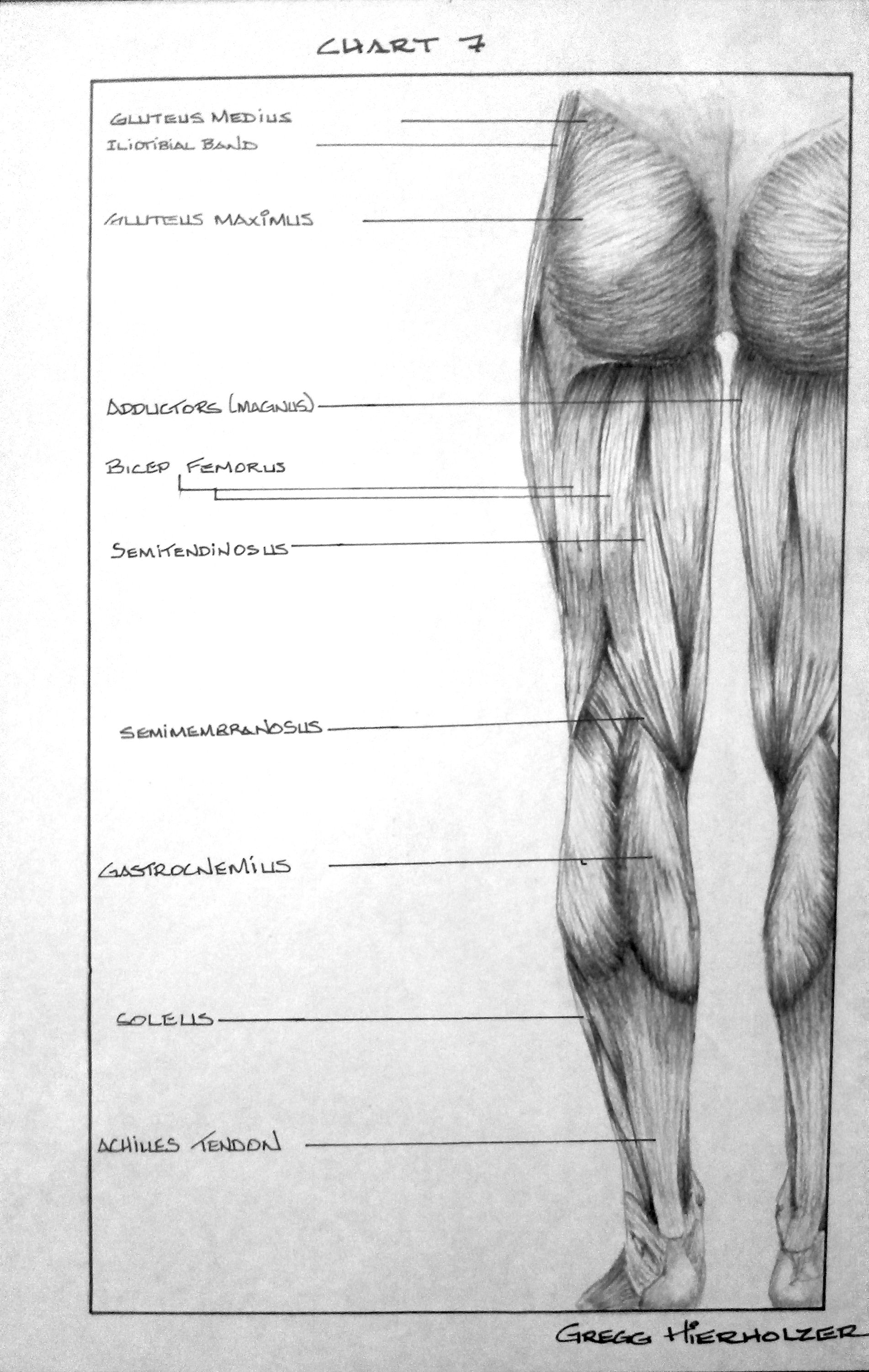 Posterior Leg Anatomy - Pencil/charcoal on paper, posterior legs. by ...