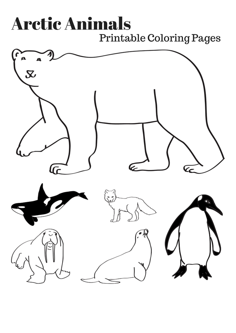 Arctic Animals Printable Coloring Pages Arctic Animals Printables Polar Animals Arctic Animals