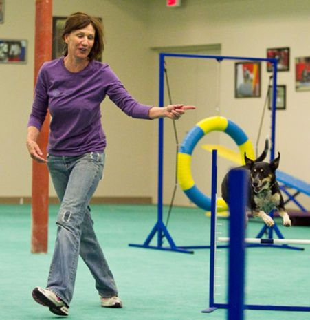 Az Dog Sports Offers Indoor Agility And Other Dog Training
