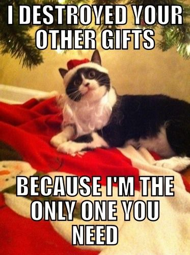 Best Animal Christmas Memes Of The Day 30 Pics Ep5 Cat Memes