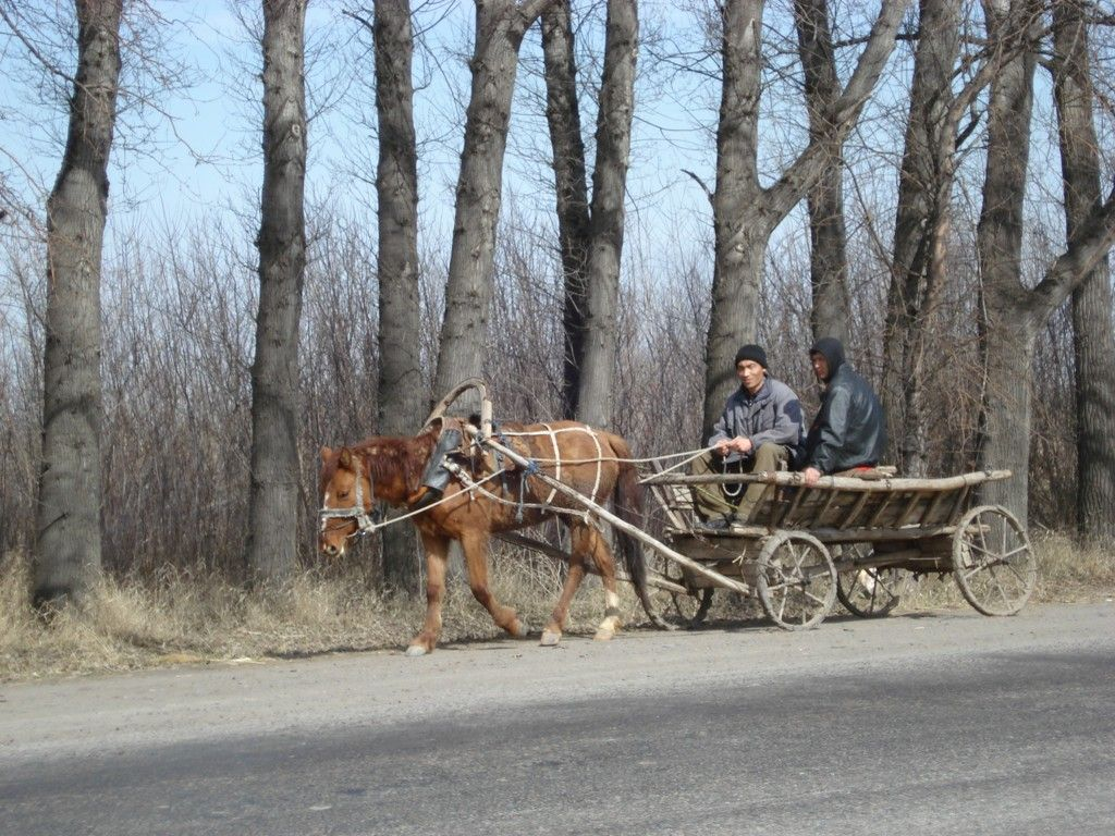 Paard en wagen