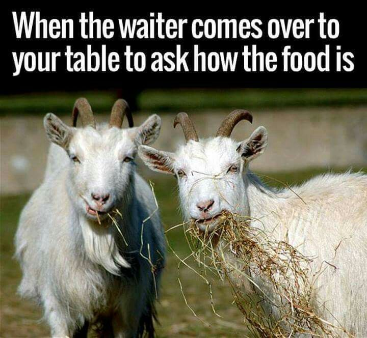 When The Waiter Comes Over To Your Table To Ask How The Food Is - 15 hilarious animals whod do anything for your food