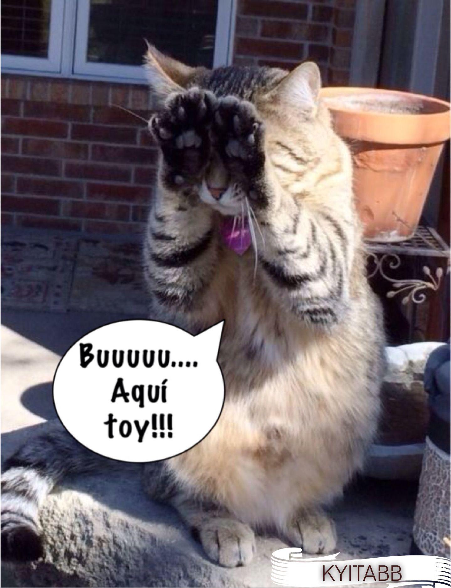 Jugando A Las Escondidas Buuuuu Aqui Toy Cats Cats