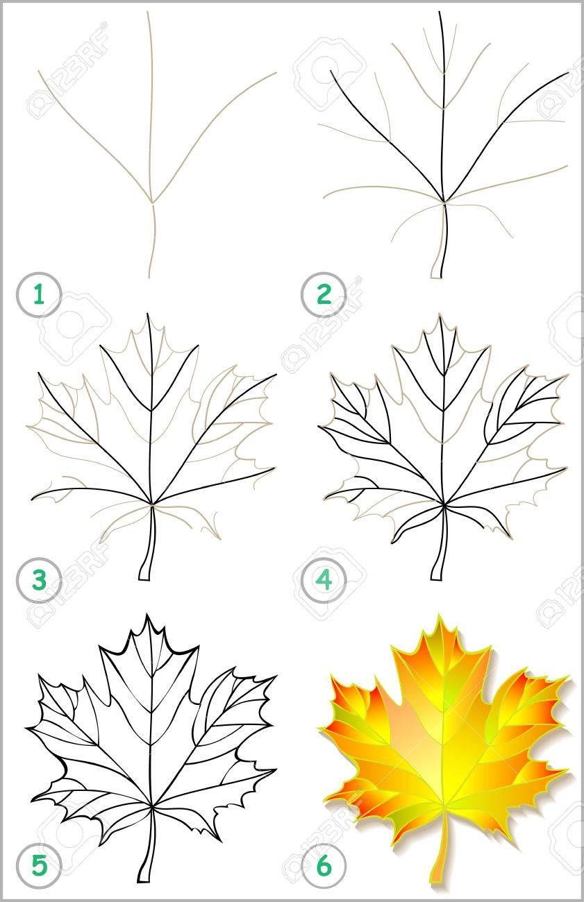 Page shows how to learn step by step to draw a maple leaf. Developing..