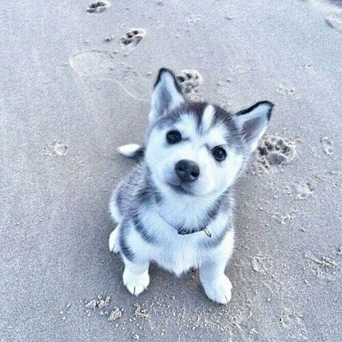 Pin By Ally On Creatures Puppies Dogs Cute Animals