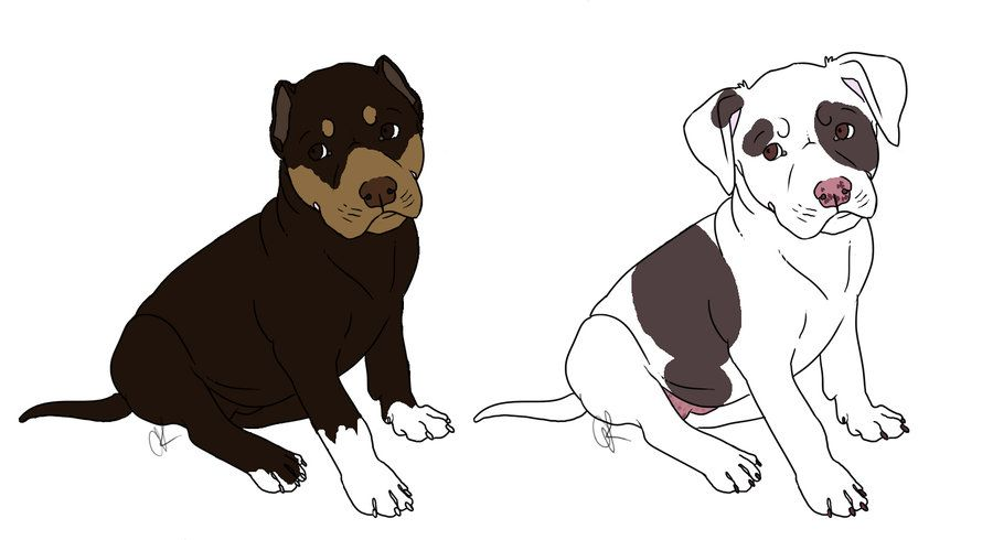 How To Draw A Pitbull Puppy Puppy Cartoon