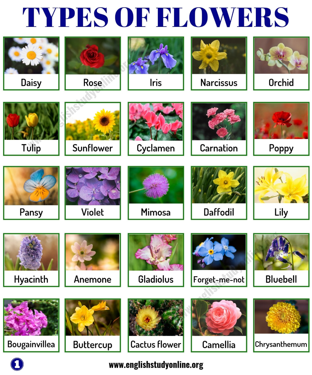 Types Of Flowers List Of 50 Popular Flowers Names In English English Study Online Flowers Name List Popular Flowers Flower Names