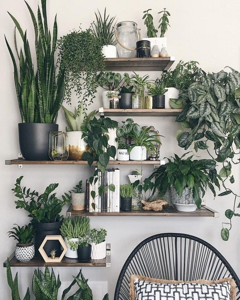 45+ Easy Simple House Plants Indoor Decor Ideas