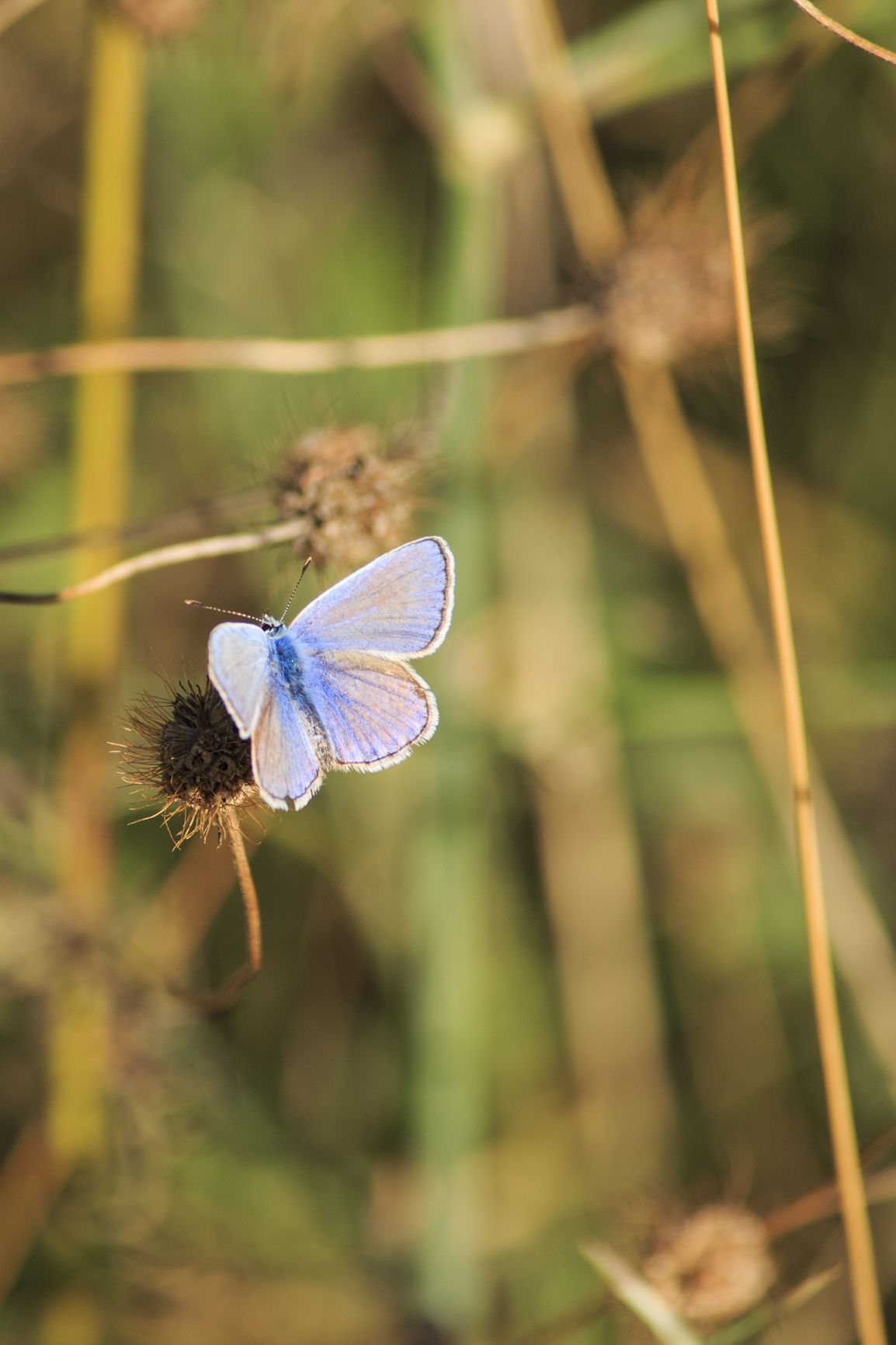 """""""Vivere non è abbastanza, disse la farfalla, uno deve avere il sole, la libertà, ed un piccolo fiore."""" HANS CHRISTIAN ANDERSEN #photography #naturephotography #butterfly"""