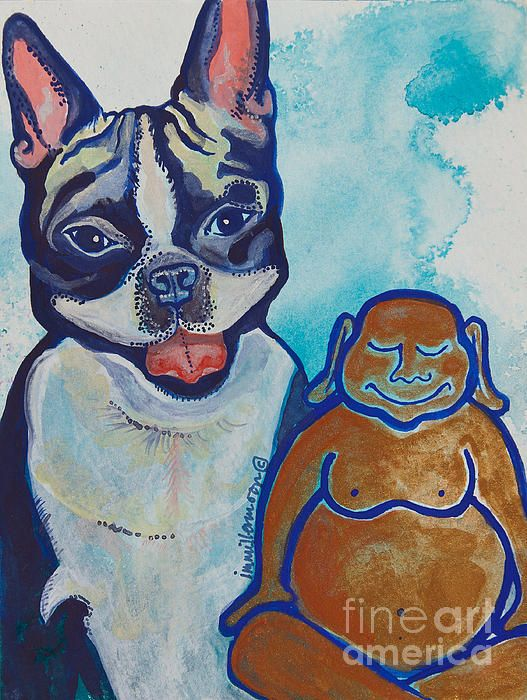 Buddha and Divine Boston Terrier