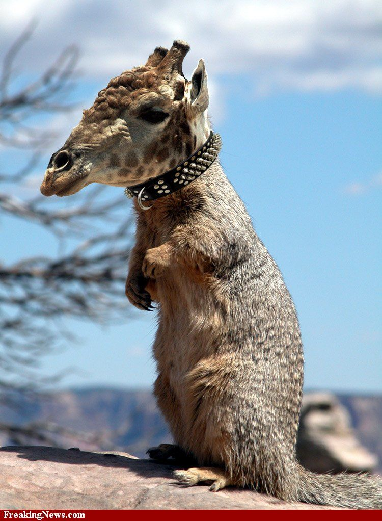 """It's amazing what you find when you type """"squirrel giraffe"""" in a search engine."""