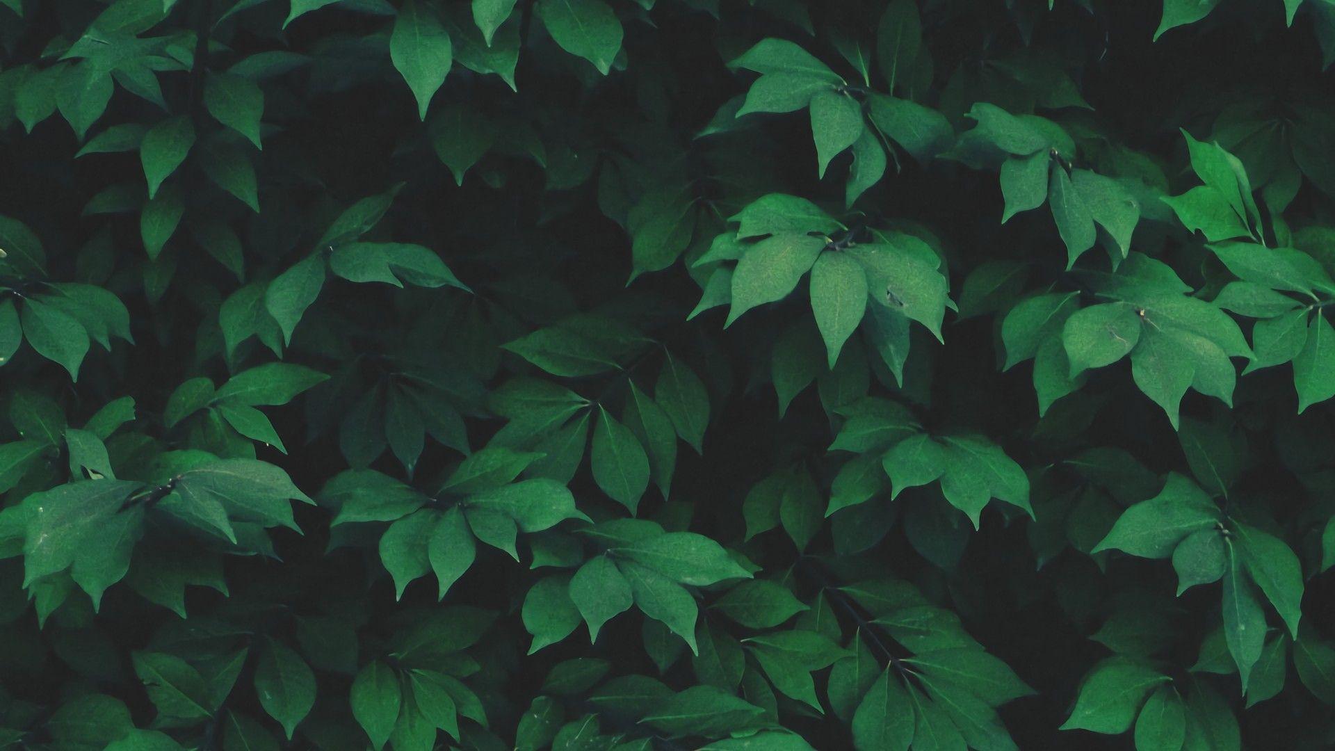 General 1920x1080 Nature Solo Plants Leaves Green Aesthetic Desktop Wallpaper Plant Leaves Green Leaves