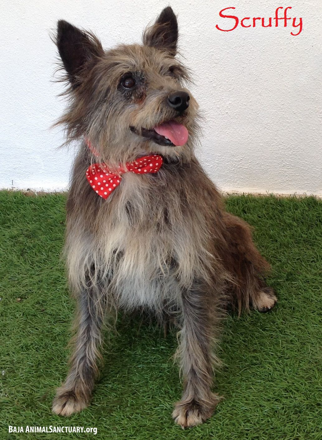 Adopt Scruffy On Pet Finder Terrier Mix Animal Projects