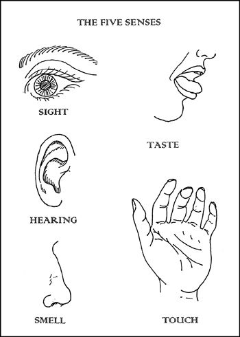 9 Senses Coloring Pages | Education | Coloring pages, Preschool ...