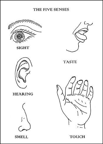 five senses coloring pages # 2