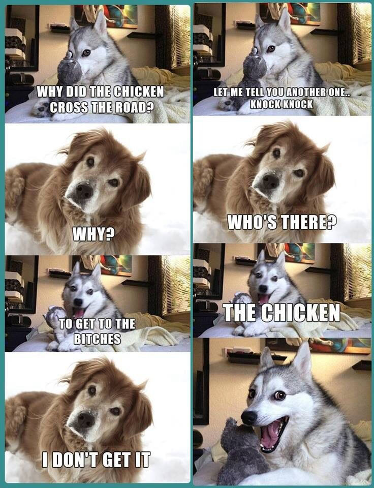 Pin by Lilly Hottenstein on Funny Funny dog jokes, Funny