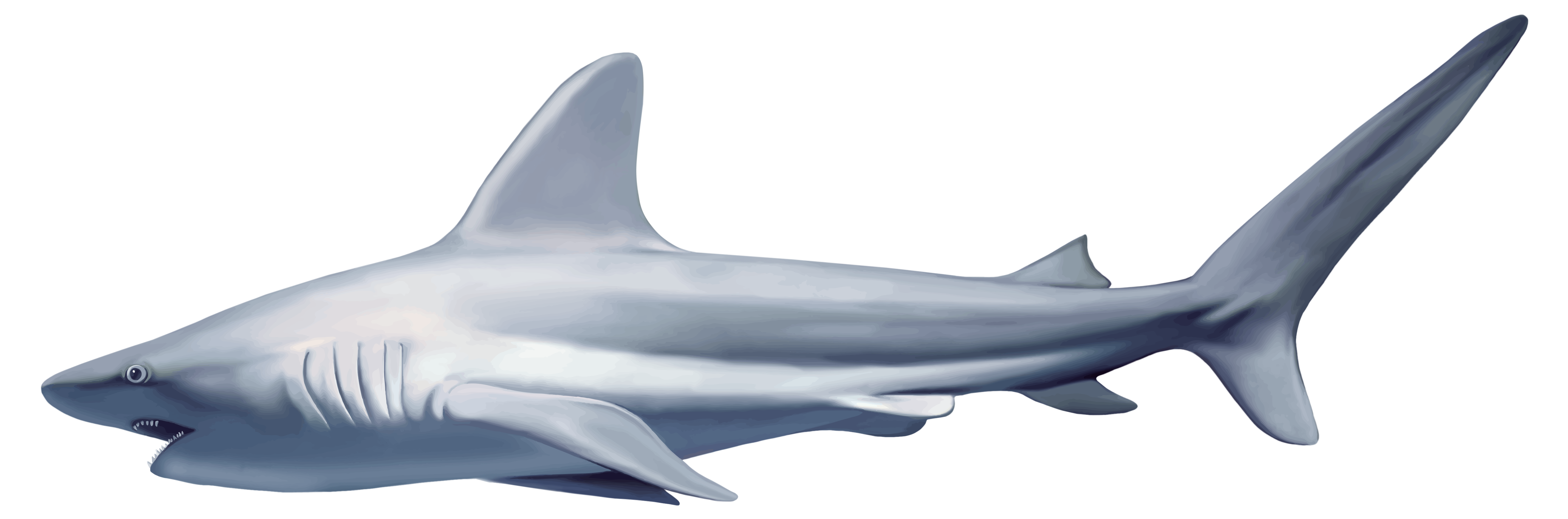 Shark PNG Clip art, Shark, Art images