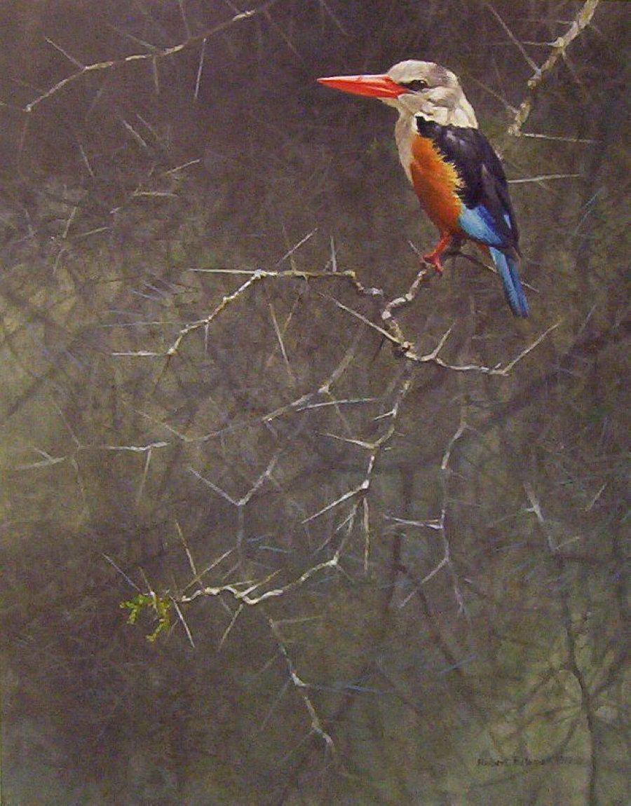 Robert Bateman - 1310901842_Sappi - grey-hooded-kingfisher
