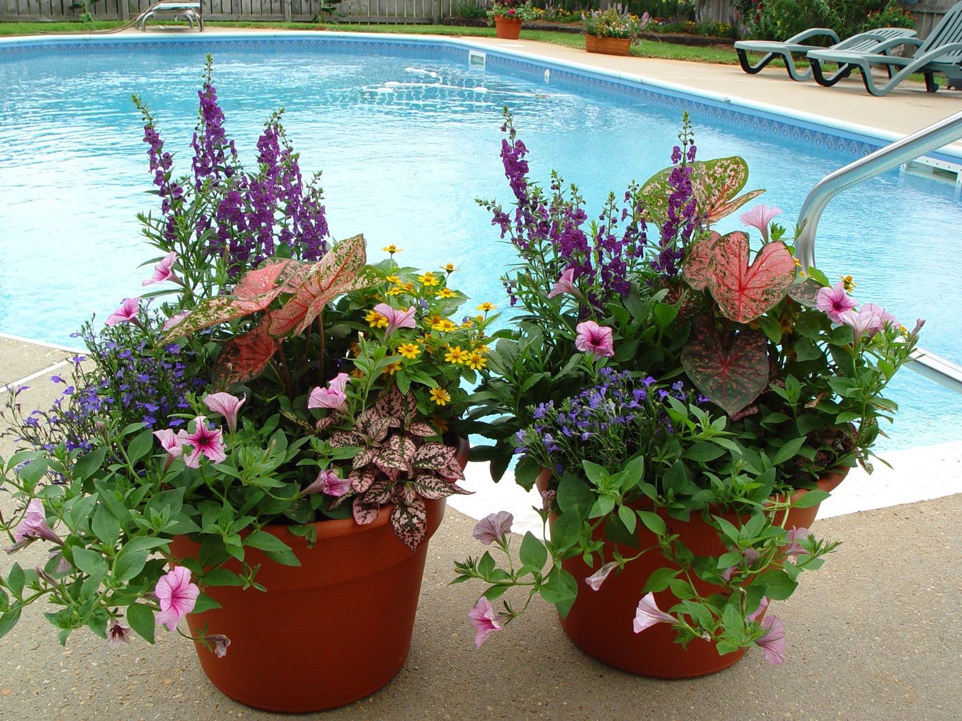 container gardening ideas with various flowers twin container gardening ideas beside the pool container gardening pictures to see more cool container - Flower Garden Ideas In Pots