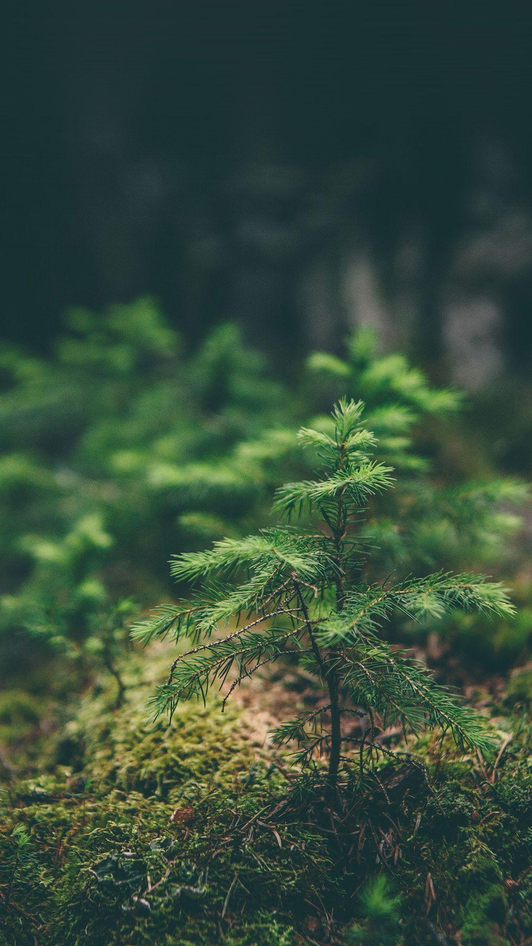 Green Moss Flower Nature iPhone 6 plus wallpaper