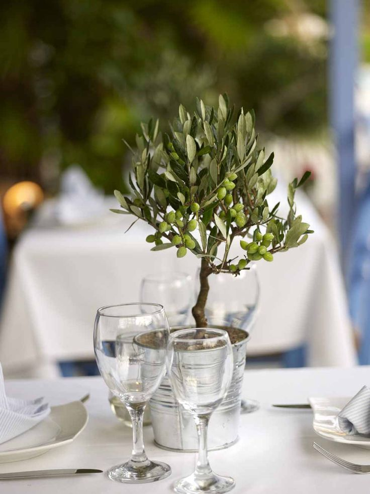 Mini olive tree as place setting containerhomes - Griechische tischdekoration ...