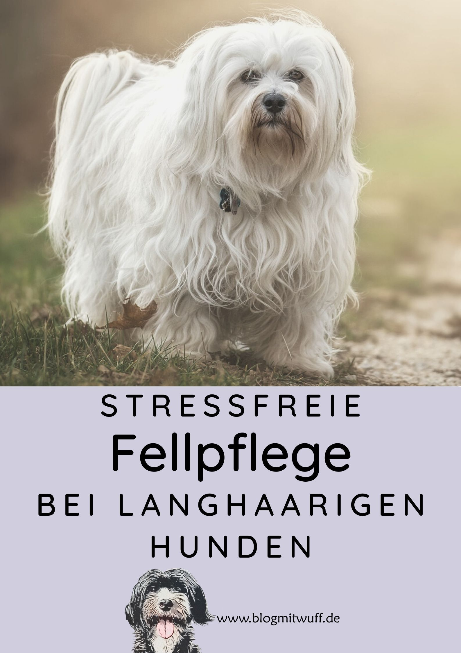 Stressfreie Fellpflege Bei Langhaarigen Hunden Hundepflege Frisuren Langhaar Hund Zahne Putzen