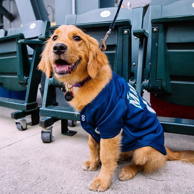Whether It S A Dog Park Or A Ballpark Your Dog Simply Loves A Good Fieldtrip Find A Barkatthepark Event Near You Ig Joshu Dogs Seattle Mariners Mariners