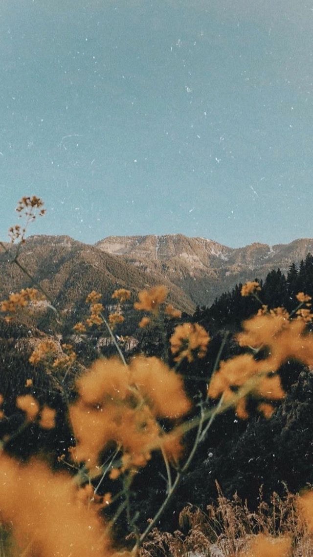 Pinned By Www Smithgoldsmith Com Outdoors Mountains Wildflowers Aesthetic Backgrounds Landscape Photography Iphone Wallpaper Vintage