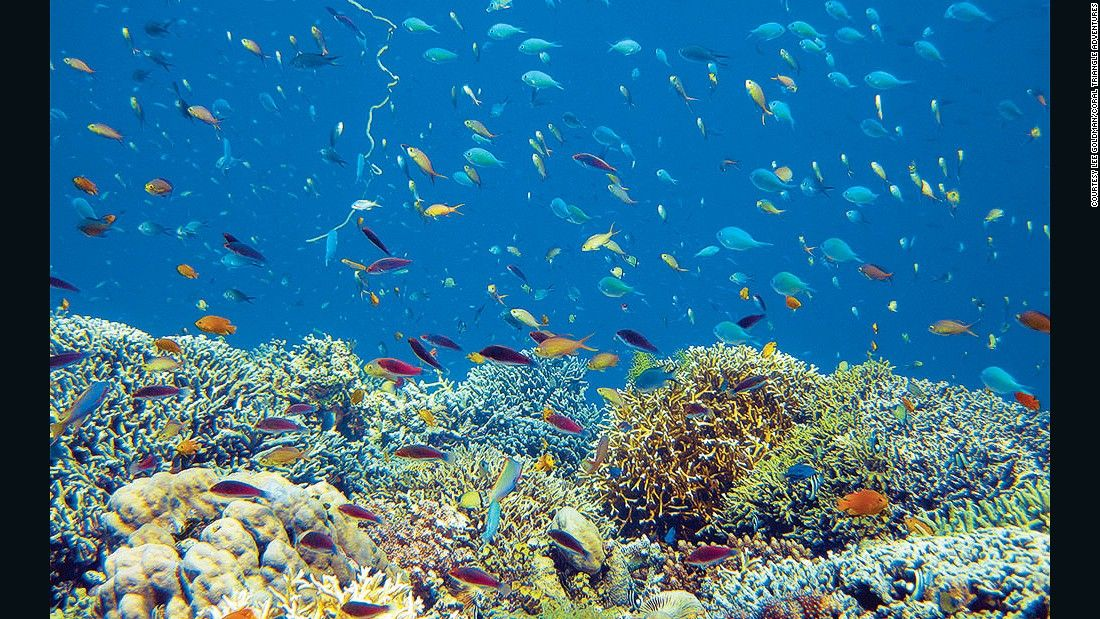 10 Of The World S Best Snorkeling Destinations Cnn